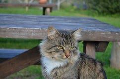Katze flaumig Lizenzfreies Stockfoto