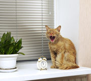 Katze gähnt auf dem Fensterbrett nahe der Warnung Lizenzfreie Stockfotos
