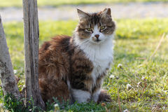 Katze gegen grünen Hintergrund Lizenzfreie Stockbilder