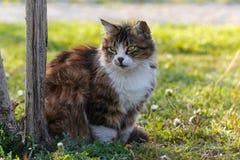 Katze gegen grünen Hintergrund Stockbilder