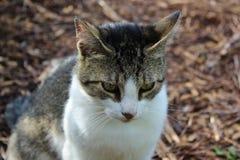 Katze gegen Holzspanhintergrund stockbilder