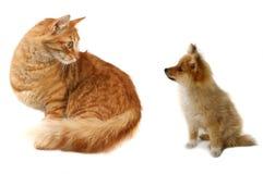 Katze GEGEN Hund Stockfoto