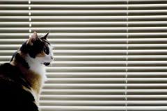 Katze gegen Jalousien Stockfotos