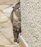 Katze gegen Wand Stockfoto