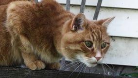 Katze gehocktes bereites sich zu stürzen Lizenzfreies Stockbild