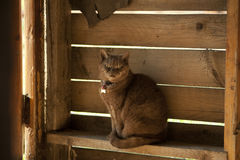 Katze geht auf einen Zaun Lizenzfreie Stockfotografie