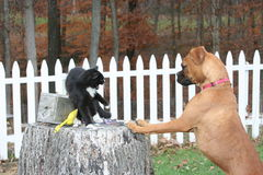 Katze gejagt durch Hund stockbilder