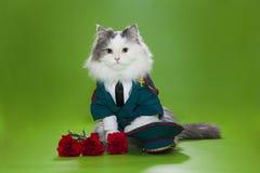 Katze gekleidet als General Stockbild