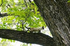 Katze geklettert in einem Baum Lizenzfreies Stockfoto