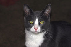 Katze-Gesicht Lizenzfreies Stockfoto