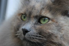 Katze-Gesicht Stockbild