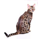 Katze getrennt auf weißem Hintergrund Stockfoto