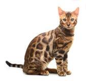 Katze getrennt auf weißem Hintergrund Stockbild
