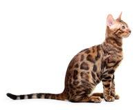 Katze getrennt auf weißem Hintergrund Lizenzfreies Stockbild
