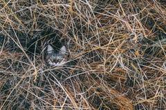 Katze in getrocknet herauf hohes Gras stockfotos