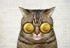 Katze in Goldeurogläsern 2 stockbild