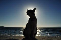 Katze in Griechenland Lizenzfreie Stockfotos