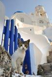 Katze in Griechenland Stockbild