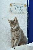 Katze in Griechenland Stockfotos