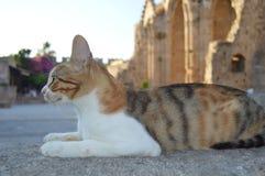 Katze in Griechenland Stockfotografie