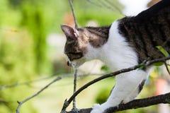 Katze hängt am Baum Lizenzfreie Stockbilder