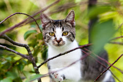 Katze hängt am Baum Lizenzfreie Stockfotos