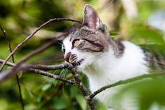 Katze hängt am Baum Stockfoto