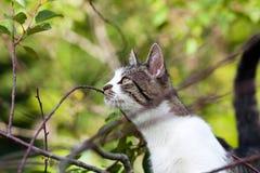 Katze hängt am Baum Stockbilder