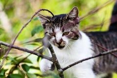 Katze hängt am Baum Lizenzfreie Stockfotografie
