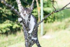 Katze hängt am Baum Stockbild