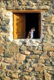 Katze am hölzernen Fenster im Steinhaus Lizenzfreies Stockfoto