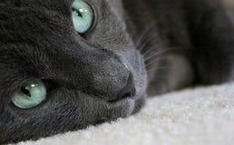 Katze-Haar Lizenzfreie Stockbilder