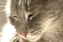 Katze-Haar Stockfoto