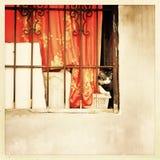 Katze hinter einem Fenster Stockfotos