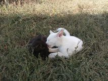 Katze, Hintergrund, Gras, Weiß, Schwarzes, Junge, Säugetier, katzenartig, Kätzchen, Miezekatze, nett, schön, Natur, Augen, Pelz,  lizenzfreie stockbilder