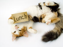 Katze hält Reklameanzeige Stockfotos