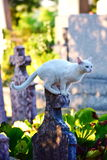 Katze huntng Stockbilder