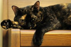 Katze II Stockbild