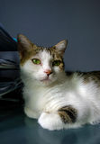 Katze im Büro Stockfotos
