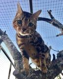 Katze im Baum Stockbild