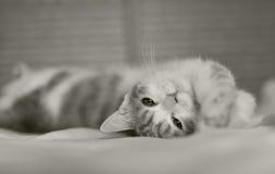 Katze im Bett Stockbild