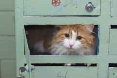 Katze im Briefkasten lizenzfreie stockfotos