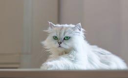 Katze im Café Stockfoto