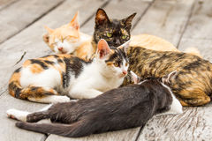 Katze im chiangmai Thailand Stockfotografie