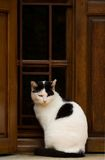 Katze im Fenster lizenzfreie stockbilder