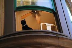 Katze im Fenster stockfoto
