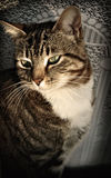 Katze im Fenster Lizenzfreies Stockbild