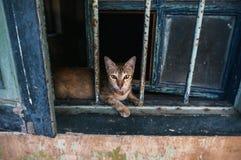Katze im Fenster auf den Ruinen eines alten Hauses Stockfotografie