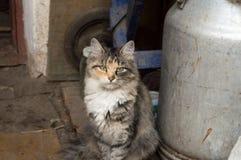 Katze im Freien Lizenzfreies Stockfoto