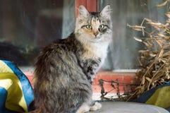 Katze im Freien Lizenzfreie Stockfotos